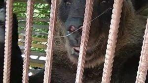 Запретить на территории развлекательного комплекса частный зоопарк.