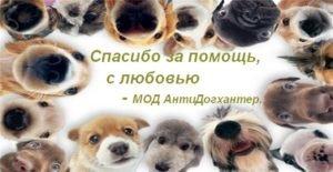 Спасибо АнтиДогхантер собаки
