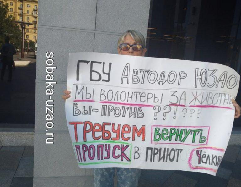 Азнауров отнял пропуска у волонтеров приюта
