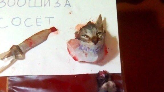 Обезглавленный живодерами котенк