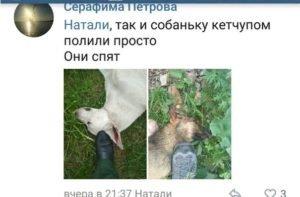 Собаки убитые живодеркой Антоновой