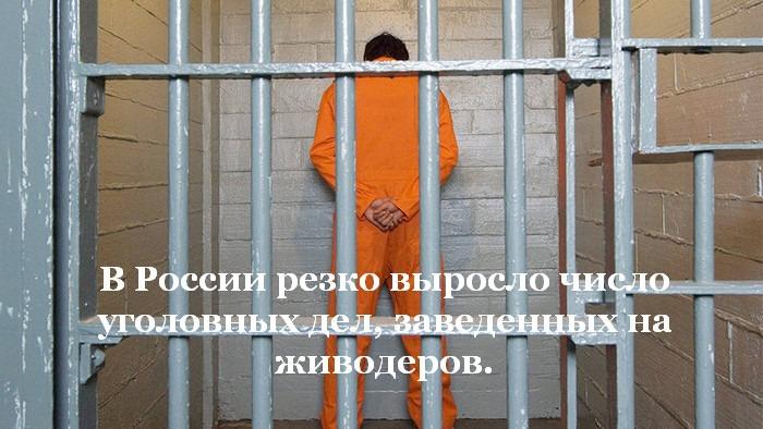 За жестокость к животным стали наказывать чаще.