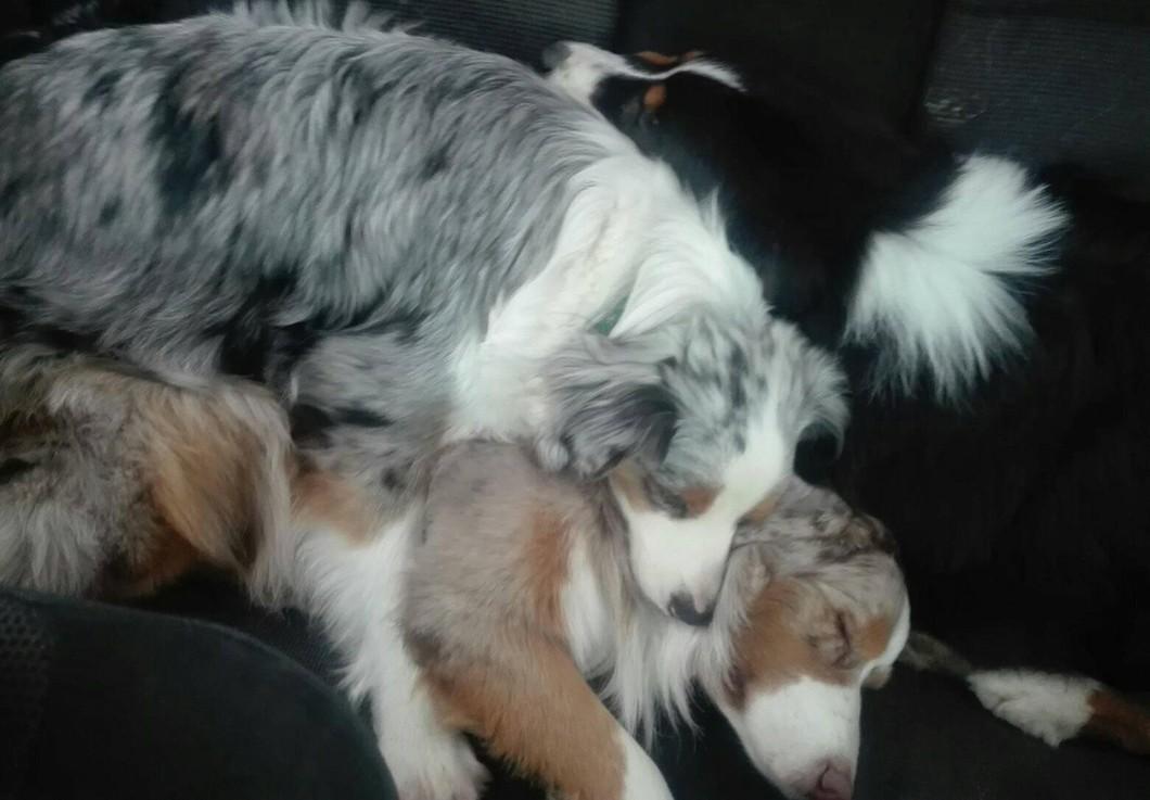 В Солнечногорском районе Московской области неизвестный застрелил трех собак, гулявших с хозяином в лесу.