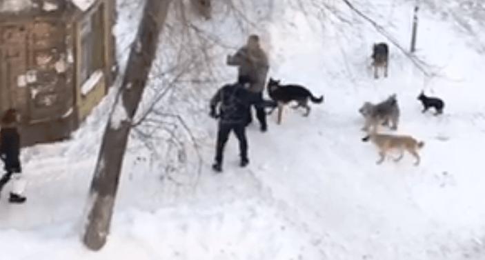 В центре Самары неизвестные стреляли в собак