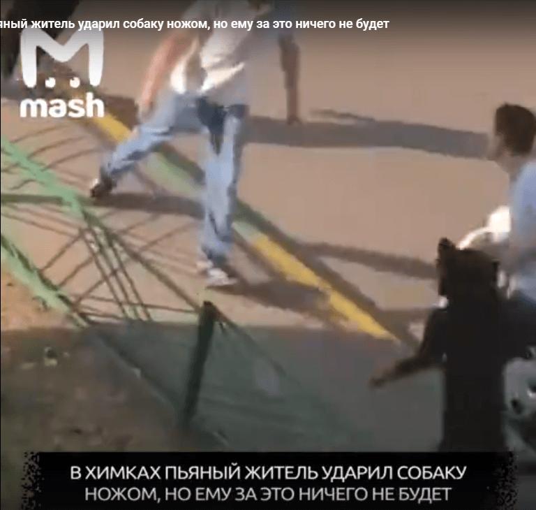 В Химках пьяный житель ударил собаку ножом