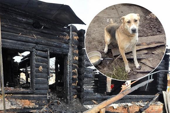 хотят усыпить собаку, которая продолжает охранять сгоревший дом