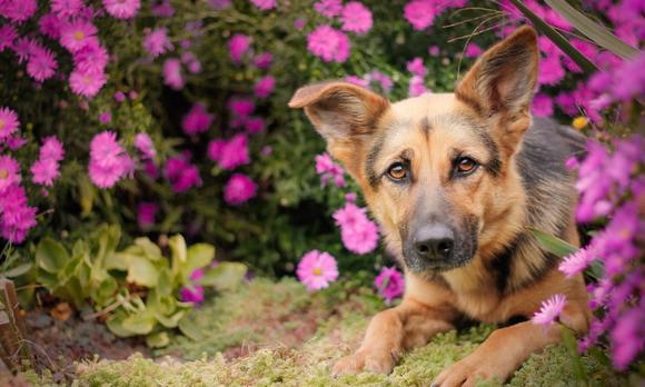 Догхантер напал на собаку и выгуливающую ее супругов