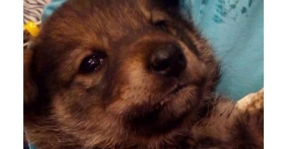Покалеченный щенок