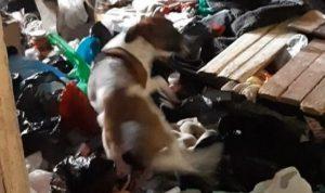 Собак убивали и ели