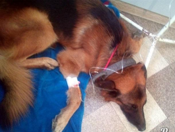 В Ростове убийцы отравили несколько собак Подробнее: http://bloknot-rostov.ru/news/v-rostove-ubiytsy-otravili-neskolko-sobak-yadom