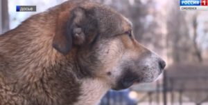 Погибла самая известная собака Смоленска.
