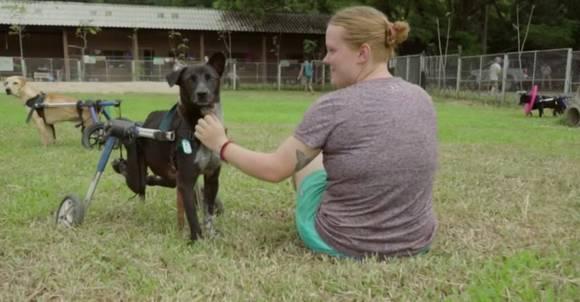 Бездомные собаки инвалиды получили шанс на любовь