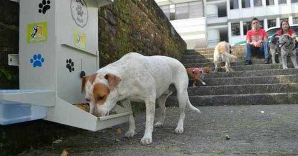В честь Рождества бездомных собак будут кормить вкусненьким.