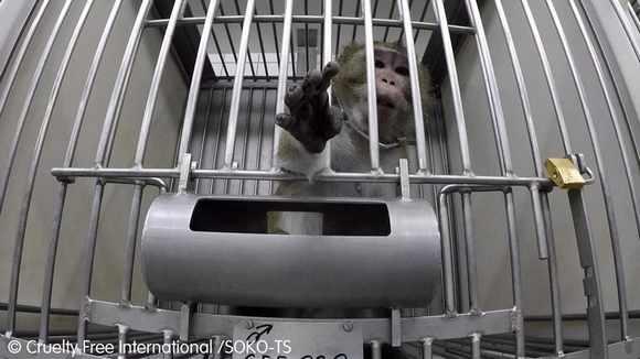 Нет издевательствам над животными
