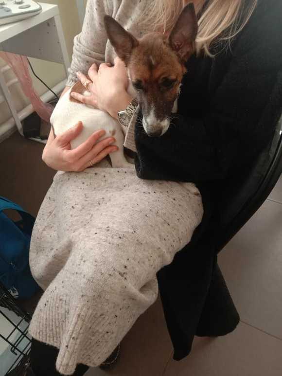 Переломы собаки - дело рук пятилетней девочки, живодерство с согласия родителей