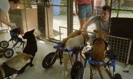 Приют бездомных собак инвалидов