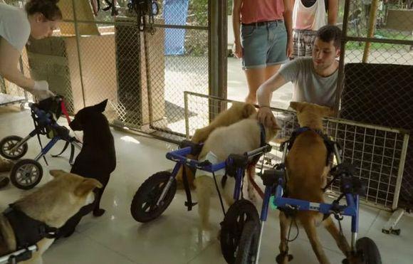 Бездомные собаки инвалиды получили шанс на любовь.