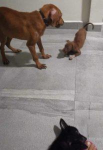 щенок нашел друзей