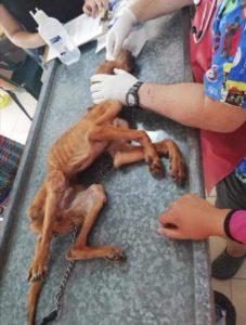Собака впервые в жизни начал получать любовь