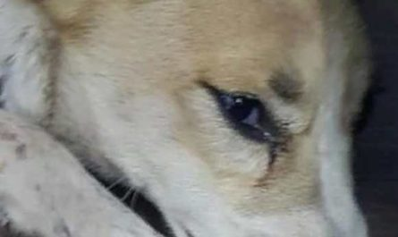 Собаке отрезали нос полиция бьет тревогу