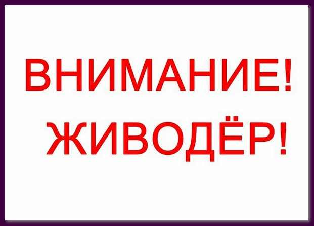 В Минске снова объявился живодер