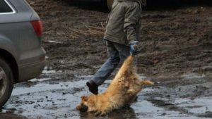 Запретить мусорщикам убивать бездомных животных