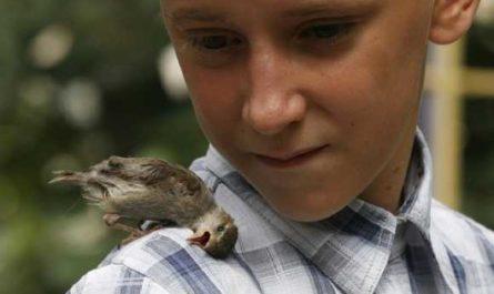 Животные ценят добрые дела и любовь