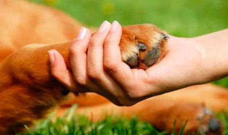 Защитники животных Казахстана Требуют принятие закона о защите животных