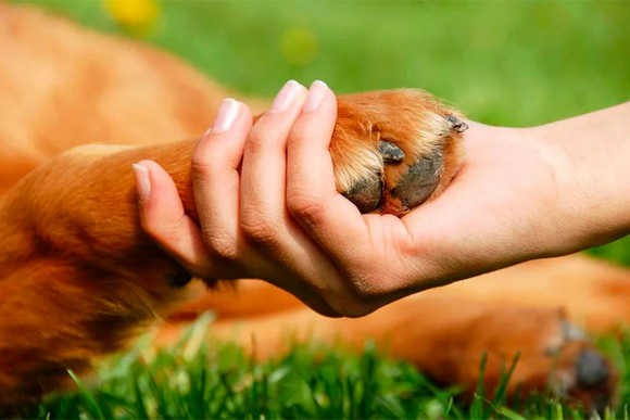 Защитники животных Казахстана Требуют принятие закона о защите животных.