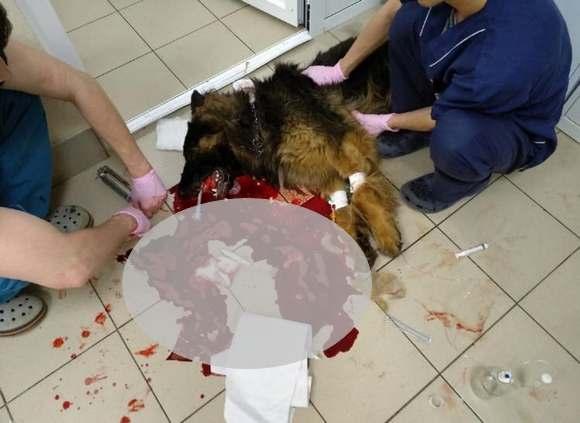 Отравили собаку ветерана МВД