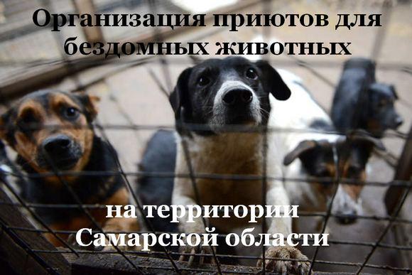 Организация приютов для животных