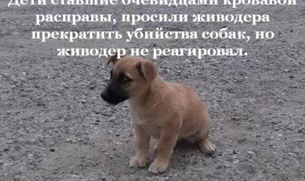 Дети просили живодера не убийства собак
