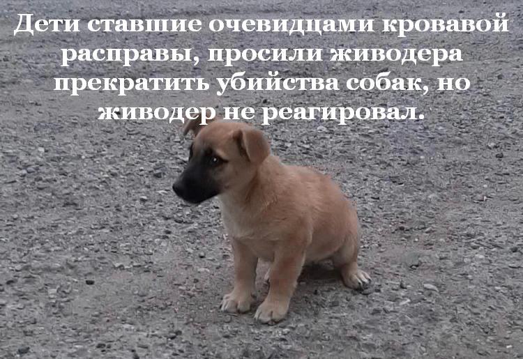 Полиция проверяет информацию о Будённовском догхантере.