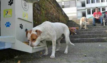 собака, кормление бездомных