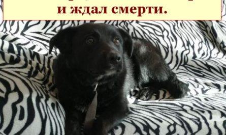 Добро побеждает — собаку спасли. 1