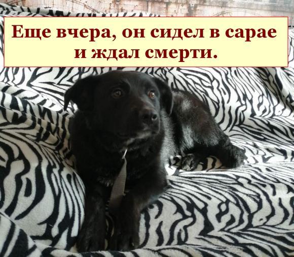 Добро побеждает — собаку спасли.