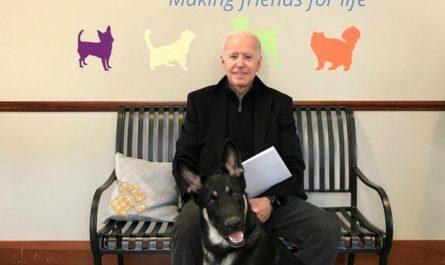 Избранный президент Джозеф Р Байден младший со своей приемной собакой