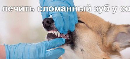 Как лечить сломанный зуб у собак