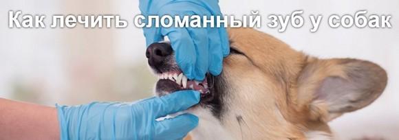 Сломанный зуб у собаки так же болезнен, как и у человека, только бедняги не могут сказать нам об этом.