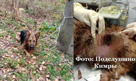 найден истязавший собаку живодер