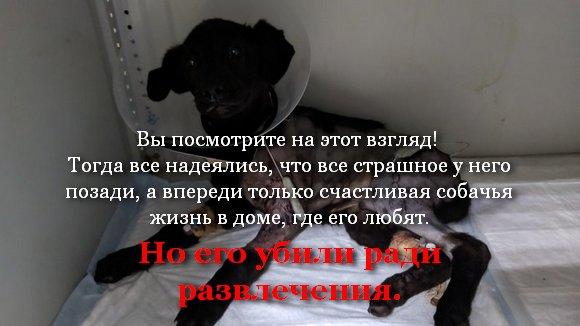 Просим наказать живодеров, застреливших трёх домашних собак! Петиция