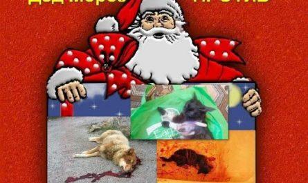 Новогодняя акция - Дед Мороз против живодеров