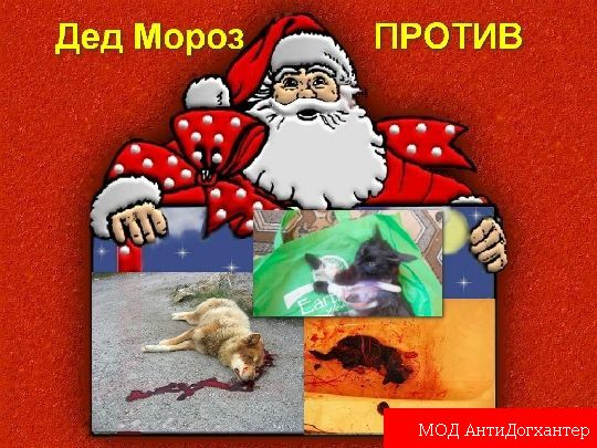Новогодняя акция — Дед Мороз против живодеров
