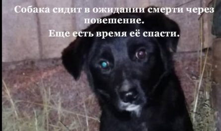 Собака сидит в сарае и ждет смерти