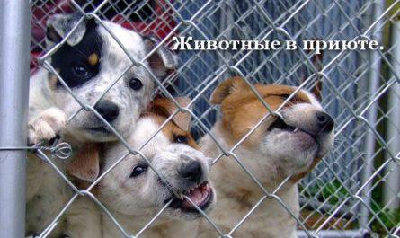 Животные в приюте.