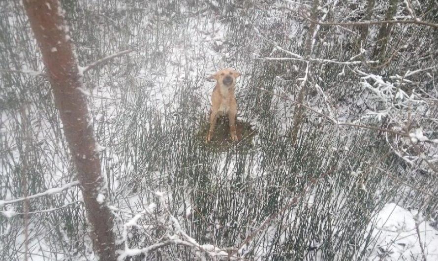 Спасенную собаку забрал к себе местный житель