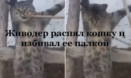 Живодер распял кошку и избивал ее палкой