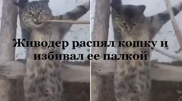 Живодер распял кошку и избивал ее палкой.(ВИДЕО 18+)