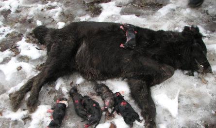 Не позволим догхантерам превратить Евровидение в Украине, в массовое убийство животных