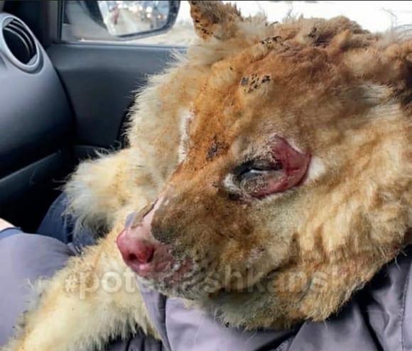 Установлена причина пожара в приюте для бездомных животных в Новосибирске